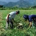 Cadastro ambiental rural tocantins