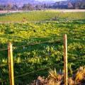 Licenciamento ambiental para atividades agrícolas