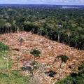 Recuperação de áreas degradadas e passivos ambientais