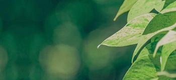 Consultoria ambiental para empresas