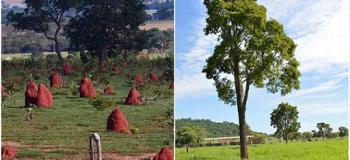 Recuperação de áreas degradadas cerrado
