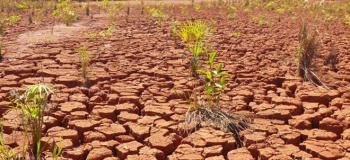 Recuperação de áreas degradadas plantio de mudas